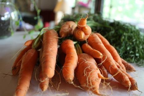 CarrotMuffin1